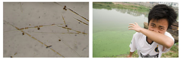 Algae blooms can have harmful impacts on ecosystems and human health.